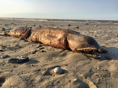 """На берег США выбросило """"неведому зверушку"""""""