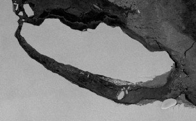 Ученые обнаружили на дне айсберга уникальную экосистему