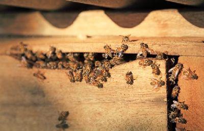Во всем мире мед отравлен инсектицидами