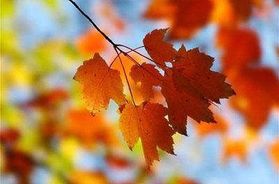 Осень покажет украинцам свое истинное лицо: свежий прогноз