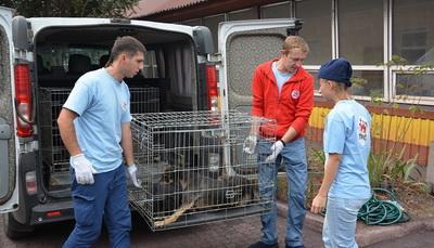 Мариупольцы в районе рынка Киевский отбивали бродячих собак от коммунальщиков