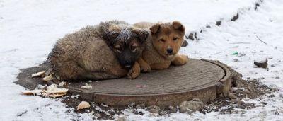В Краматорске готовы потратить миллионы, чтобы бездомные животные не размножались