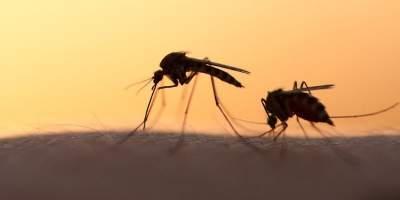 Стало известно, кого комары кусают чаще всего