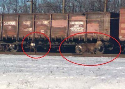 По Донбассу носятся фазаны, зайцы и олени