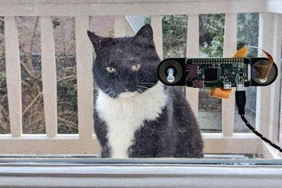 Голландский программист создал систему распознавания кошек