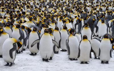 """В Антарктике обнаружили """"пингвиний мегаполис"""""""