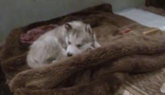 В Мариуполе судят пенсионерку, которая изувечила трехмесячного щенка (ВИДЕО)