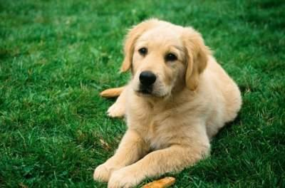 Ученые выяснили невероятный факт о собаках