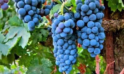 В Китае нашли вино возрастом 2000 лет
