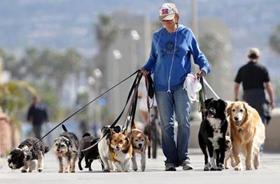 Владельцев собак ждут массовые штрафы