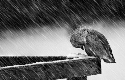 Весны будут холодными: появился прогноз погоды в Украине на следующие три года