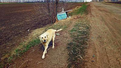 На Харьковщине Хатико ждет хозяина, который оставил его в поле