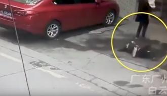 Китаянке на голову упала собака: женщина в реанимации