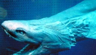 Ученые обнаружили древнейших существах на Земле, считавшихся вымершими