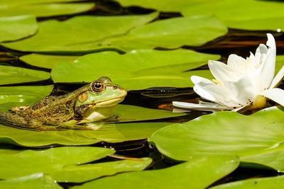 По всему миру начали вымирать лягушки