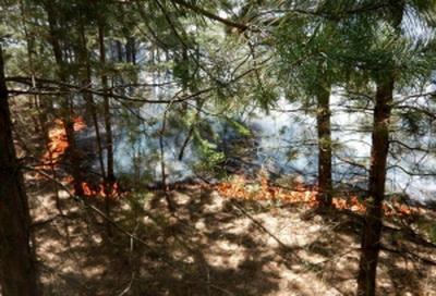 Донбасс в огне: массированный удар артиллерии оккупанта спровоцировал масштабный пожар у Северодонецка