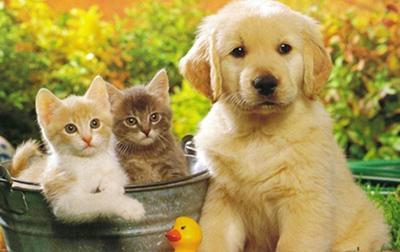 Домашние животные на контроле. Как изменится ответственность владельцев