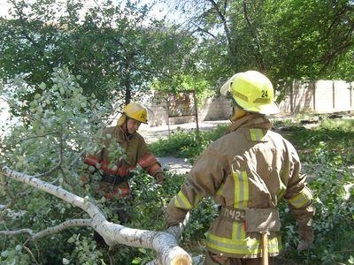 Спасатели Донетчины сражались с деревьями