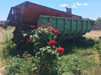 Розы в сердце войны: появилось потрясающее фото из Авдеевской промзоны