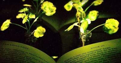 Светящиеся растения могут быть созданы уже в ближайшее время