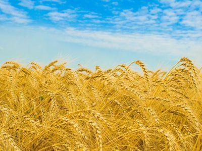 Россия вывозит с Донбасса вывозят зерно, а завозит всякое дер*мо