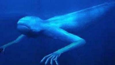 В водах канала Пуэрто-Рико заметили странное существо