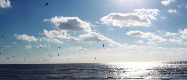 В мэрии Мариуполя рассказали о состоянии воды в Азовском море