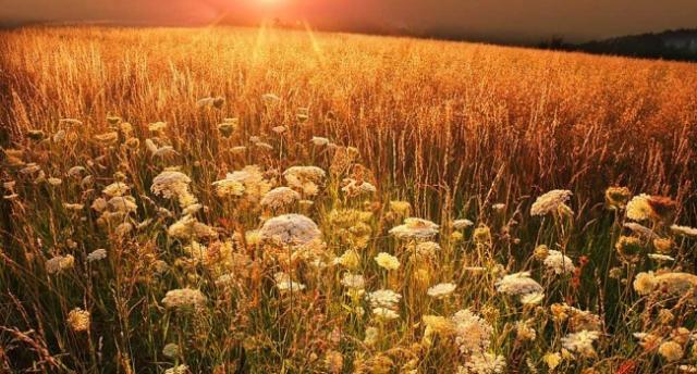 """""""Бабье лето"""": в Украине началось потепление"""