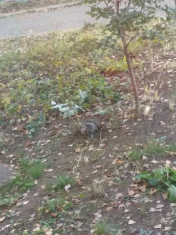Взрыв в Лисичанске: во двор школы упала часть ракеты