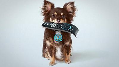 Японцы придумали устройство для дистанционного управления собаками (ВИДЕО)