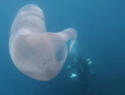 У берегов Новой Зеландии засняли странное восьмиметровое существо