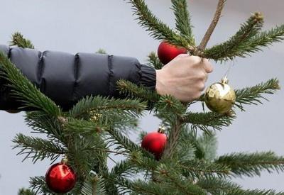 Мариупольцам рассказали, где откроют пункты сбора новогодних елок