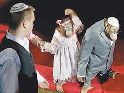 Скандал в цирке: обезьян обвинили в антисемитизме