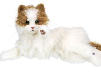 Dream Cat Venus.