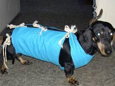 Операцию провели для того, чтобы спасти больное животное.