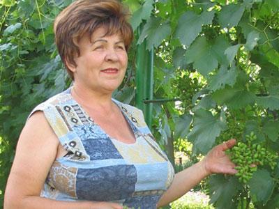 Сорт винограда Лора имеет хорошую репутацию у Людмилы Пашковской.