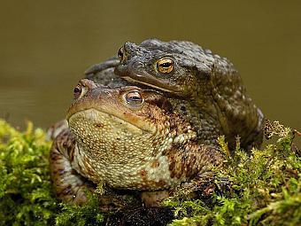 Секс с мобильного с жабой фото 167-27