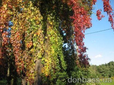 http://donbass.ua/multimedia/images/news/original/image_923745701250711276238234506257650925.jpg