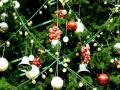 Новый год-2011. Как правильно наряжать новогоднюю ёлку? (ВИДЕО)