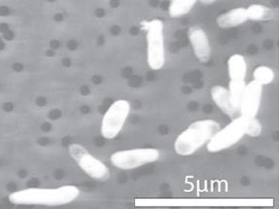 NASA объявило миру о сенсации - бактерии с инопланетной ДНК