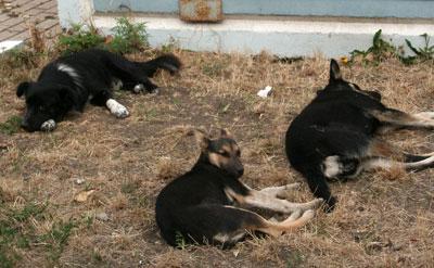 Этой расположившейся на отдых в центре Волновахи стае собак просто повезло.