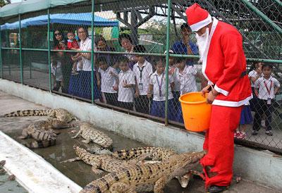 В зоопарке на Филиппинах к крокодилам в вольер пришел Санта-Клаус с вкусными подарками в ведре. Однако зубастым обитателям больше понравились штаны новогоднего деда. Крокодилы растерзали их на тряпки.