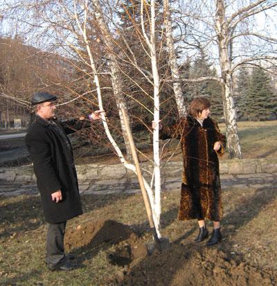 13 декабря в Красноармейске высадили 90 березок.