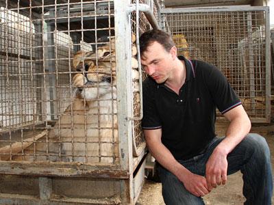 Николай Козырев продолжает традиции гуманной советской дрессуры. Неудивительно, что львица Сара ластится к своему хозяину, совсем как мирная домашняя кошка.