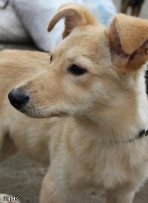 Собаки ПИФа ищут хозяев
